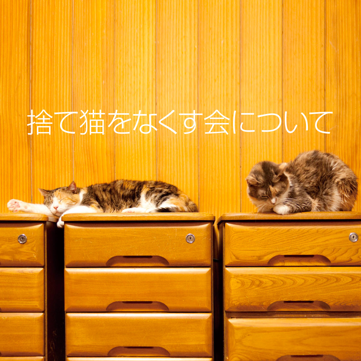 掲示板 譲ります 無償 猫